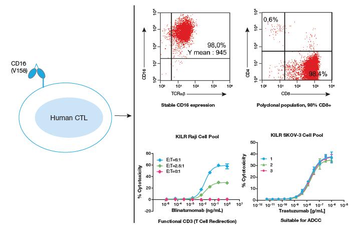 Human CTL Data