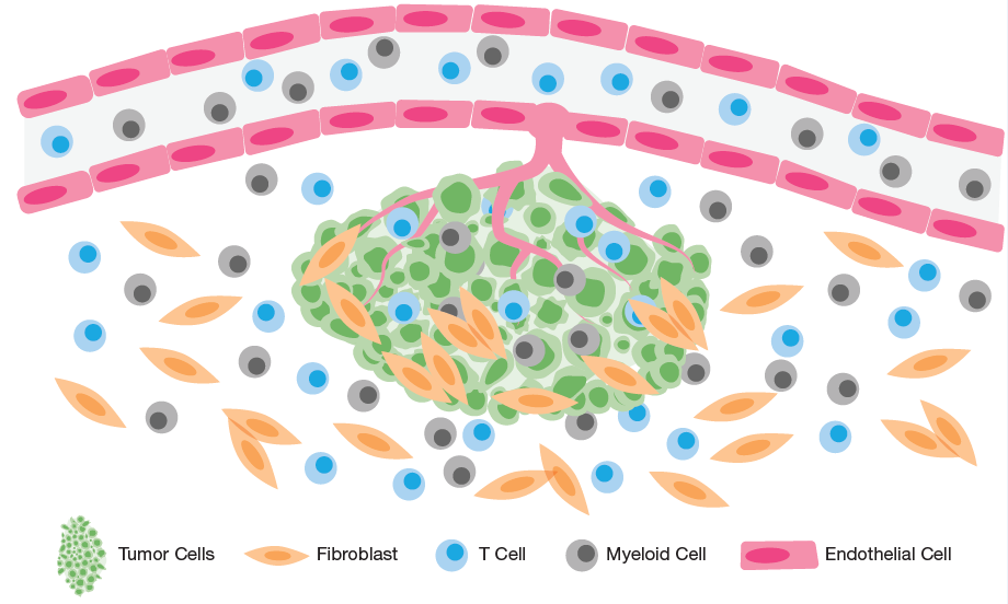 Modeling the Human Stromal and Vascular Tumor Microenvironment In Vitro